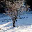 Sunlight on frosted twigs of tree — Stock Photo