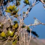 Leaves frame Na Pali Coast — Stock Photo