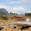 Rocky formations by sea on Kauai — Stock Photo