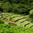 Terraced agriculture on Kauai - Stock Photo