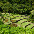 Stock Photo: Terraced agriculture on Kauai