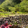 Terraced agriculture on Kauai — Stock Photo