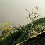 Yellow lichen on tree twigs — Stock Photo