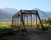 Taro plants at Hanalei Bridge — Stock Photo