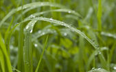 Morning dew — Stock Photo