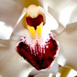 Royalty-Free Stock Photo: White orchid