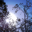 Stock Photo: Branch and sun on background of th