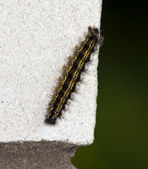 The fluffy caterpillar creeps on a white — Stock Photo