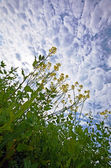 Grass on a background of the sky — Stock Photo