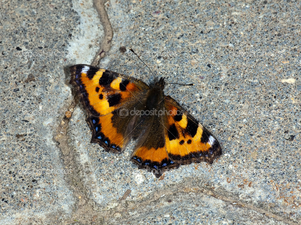 The butterfly sitting on road concrete at a sunlight — Stock Photo #1027808