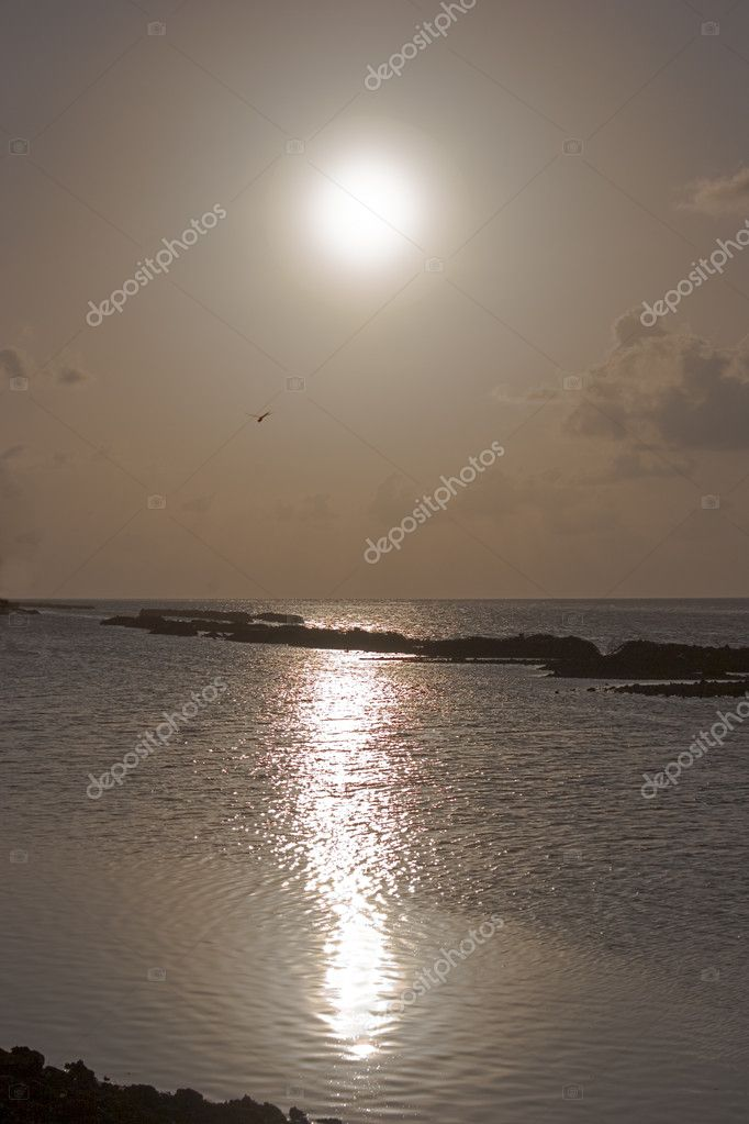 Dragonfly on a sunset above ocean — Stock Photo #1028259