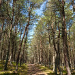 The Glade in National park Curonian Spit — Stock Photo