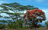 Multi-coloured trees at road — Stock Photo