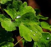 Drops on leaves — Stock Photo