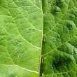 Stock Photo: Green leaf damaged by caterpillars