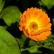 Yellow flower — Stock Photo #1223552