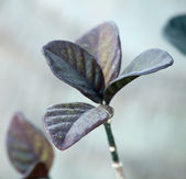 Quartet from leaves — Stock Photo