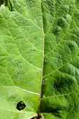 Green leaf damaged by caterpillars — Stock Photo