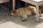 Dog sleeping on construction area — Stock Photo