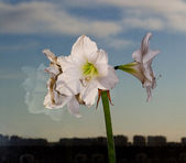 White flower above city — Stock Photo