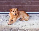 Dog sleeping on construction area — Stock Photo