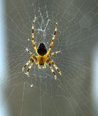 Spider on a web on window — Foto de Stock
