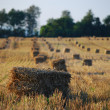 Bales in the field — Stock Photo