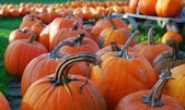 Pumpkins for sale — Stock Photo