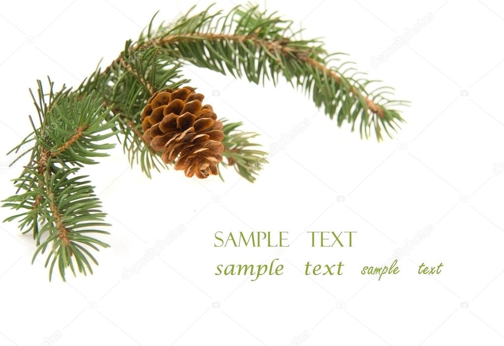 Branch of Christmas tree isolated on white — Stock Photo #1645896