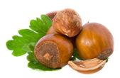 Filbert nuts — Stock Photo