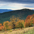 Autumn in mountains — Stock Photo #1023944