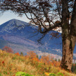 Autumn in mountains — Stock Photo #1024015