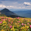 Meadow in mountains — Stock Photo #1033822