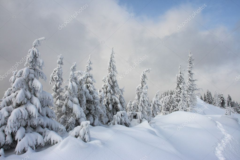 A frosty and sun day is in mountains — Stock Photo #2605677