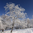 Winter trees - Foto de Stock