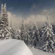 Winter fir — Photo