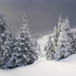 Winter fir — Stock Photo #2618888