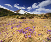 Spring in mountains — Stock Photo