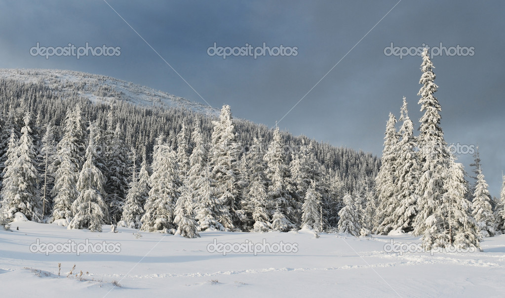 A frosty day is in mountains — Stock Photo #2618163