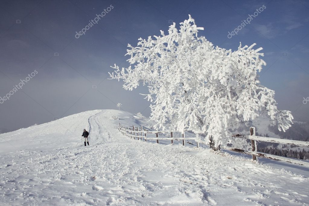 Winter tree in mountains covered with fresh snow — Stock Photo #2618899