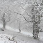 Winter trees — Stock Photo #2625106