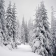 winter boom — Stockfoto #2625371