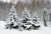 árboles de invierno — Foto de Stock