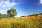 Yeşil ağaç — Stok fotoğraf