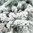 Snowbound branch of fir. - Stock Photo