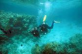 Twee snorkelaars onder water — Stockfoto