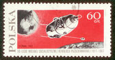 Postage stamp from Poland. — 图库照片