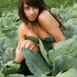 The young girl hides in cabbage. — Stock Photo