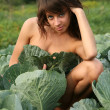 The young girl hides in cabbage. — Stock Photo #1216913