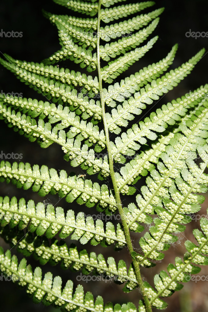 Plant of the wild fern — Stock Photo #1022986